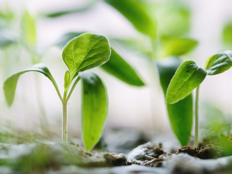 POSTPONED: Spring Plant Sale